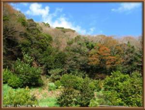 Jan08_15_HikingOnDaffodilRoad_Kyonan_Machi_ChibaRC