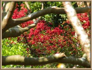 Jan08_37_HikingOnDaffodilRoad_Kyonan_Machi_ChibaRC