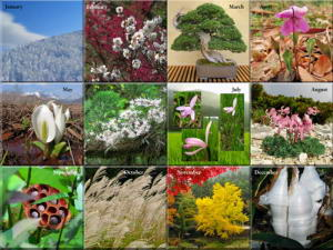 2014 Photo Calendar - Japan's Flowers, Plants & Trees - The Photos