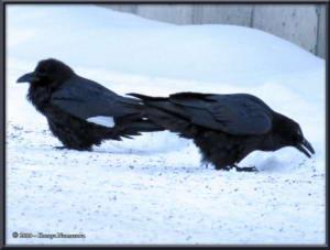 Dec23rd_001_RavenRC