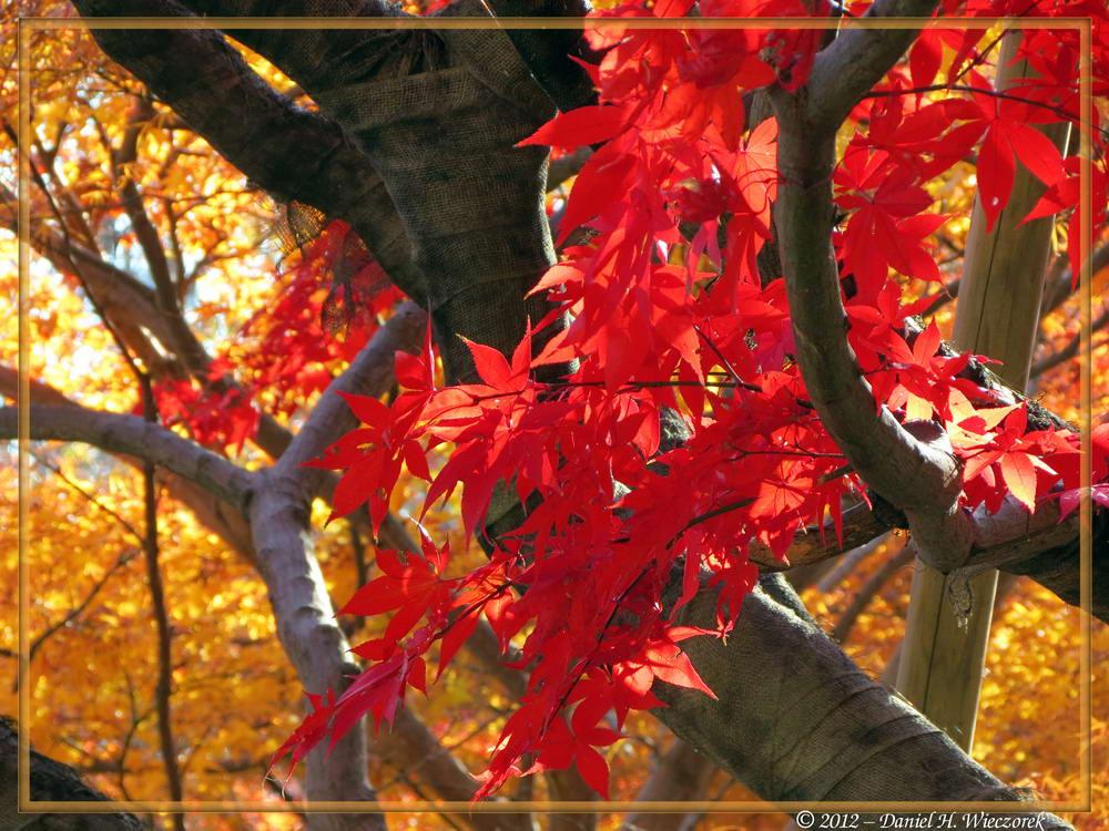 Beautiful Fall Colors at Jindai Botanical Garden