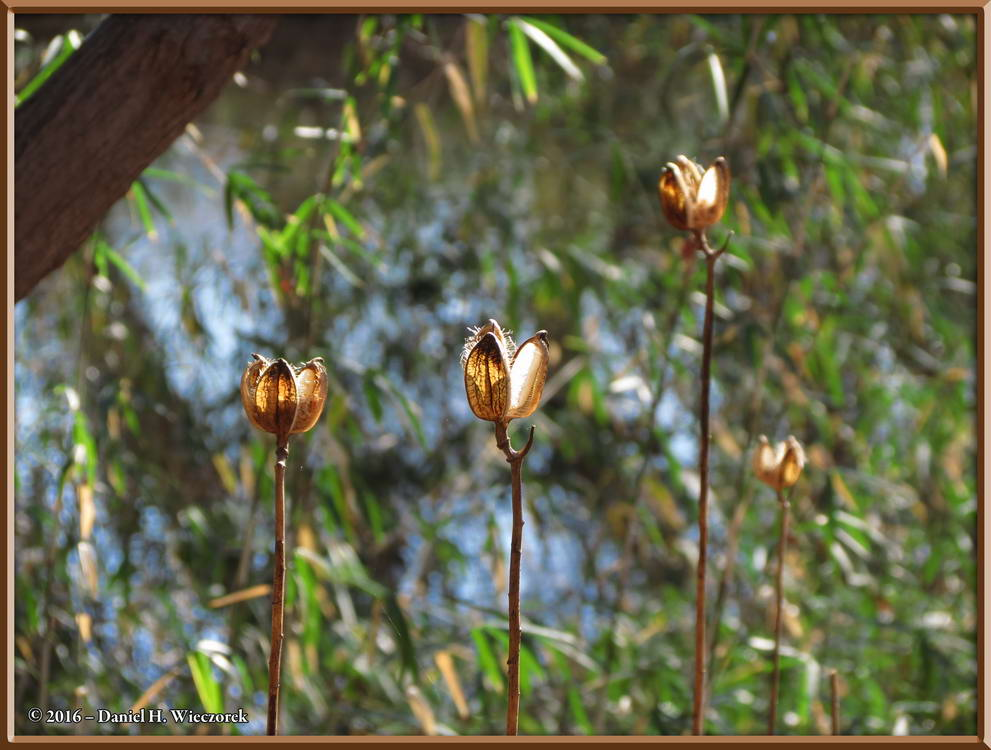 Yuba-Yuri Seedheads - Nogawa Park - January 16, 11:08 AM