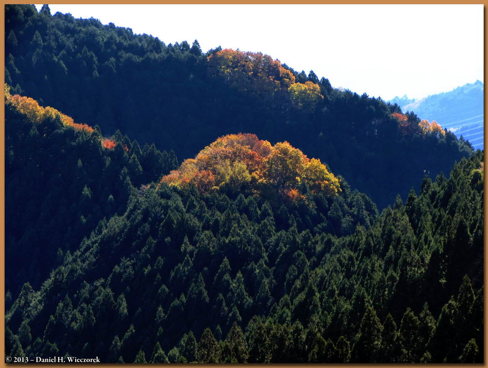 A Colorful Hilltop among the Cedar Trees. November 23rd, 9:29 AM.