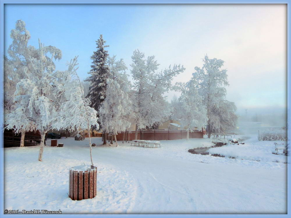Beauty in the Snow - Chena Hot Springs, November 25th, 2:36 PM