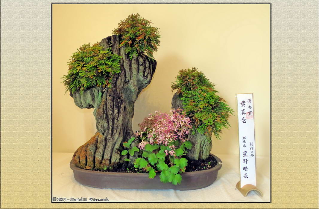 Iwa-Hiba - Spike Moss - Jindai Botanical Garden. October 24th, 10:47 AM