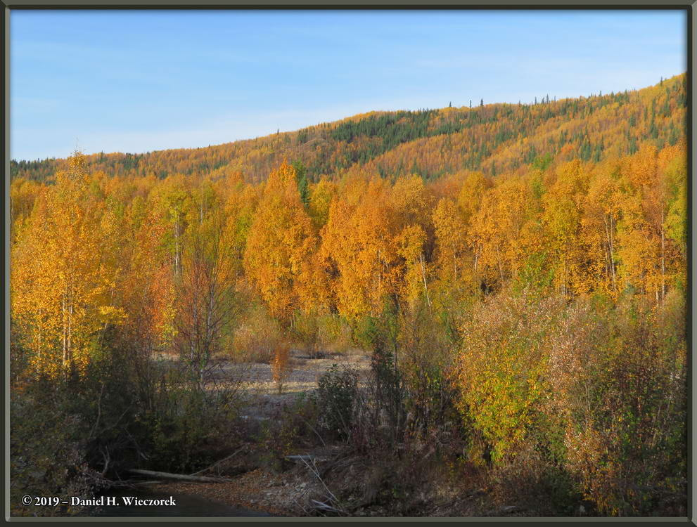 Autumn Color - Along the Upper Chena River