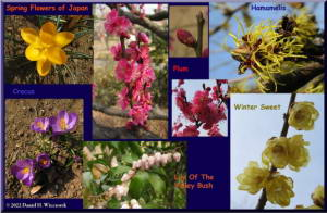 SpringFlowersCollagePostcard.jpg