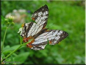 TamaZoolPark12_Butterfly.jpg
