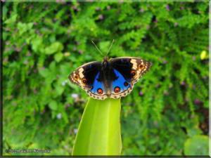 TamaZoolPark15_Butterfly.jpg