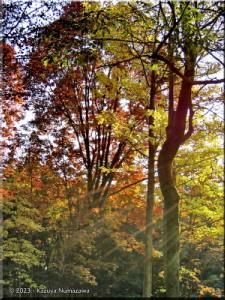 01Dec_JindaiBotanicalGardenFallColors31sRC.jpg