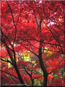 Dec01_JindaiBotGardenFallColor14RAWRC.jpg