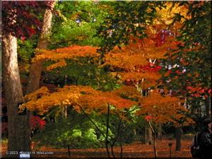 Dec01_JindaiBotGardenFallColor16RC.jpg