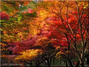 Dec01_JindaiBotGardenFallColor19_BESTRC.jpg