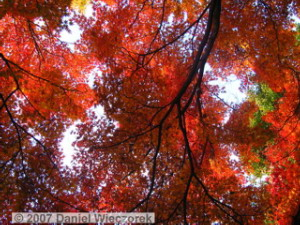 Dec01_JindaiBotGardenFallColor25RC.jpg