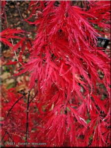 Dec01_JindaiBotGardenFallColor34RC.jpg
