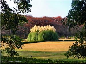 Dec01_JindaiBotGardenFallColor45sRC.jpg