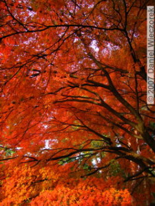 Dec01_JindaiBotGardenFallColor75RAWRC.jpg