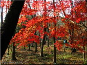 Dec08_NogawaPk_FallColors32RC.jpg