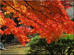 Dec08_TonogayatoGardens_FallColors09RC.jpg