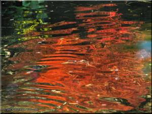 Dec08_TonogayatoGardens_FallColors70sRC.jpg