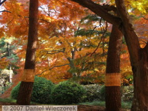 Dec08_TonogayatoGardens_FallColors92RC.jpg