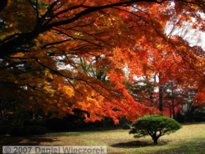 Dec08_TonogayatoGardens_FallColors93RC.jpg