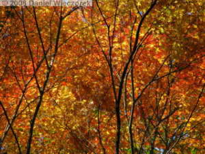 Dec06_Sourousenen_FallColor19RC.jpg