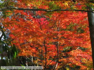 Dec06_Sourousenen_FallColor22_BESTRC.jpg