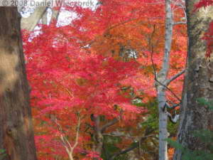 Dec06_Tonogayato_FallColor13RC.jpg