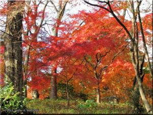 Dec06_Tonogayato_FallColor18RC.jpg