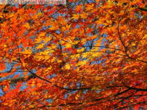 Dec06_Tonogayato_FallColor23RC.jpg