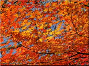 Dec06_Tonogayato_FallColor23RC.jpg
