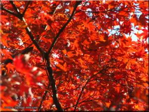 Nov30_JindaiBG_FallColor_023RC.jpg