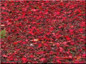 Nov30_JindaiBG_FallColor_028RC.jpg