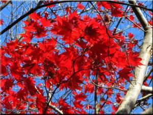 Nov30_JindaiBG_FallColor_030RC.jpg