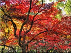 Nov30_JindaiBG_FallColor_042sRC.jpg