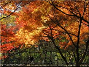 Nov30_JindaiBG_FallColor_046RC.jpg