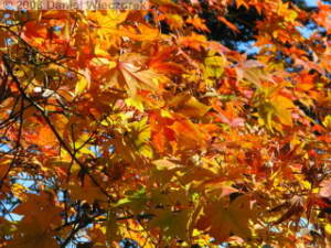 Nov30_JindaiBG_FallColor_053RC.jpg