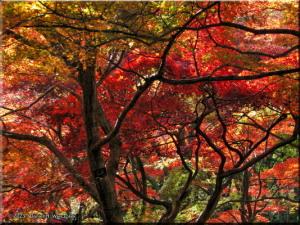 Nov30_JindaiBG_FallColor_071RC.jpg