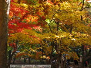 Nov30_JindaiBG_FallColor_115_BESTRC.jpg