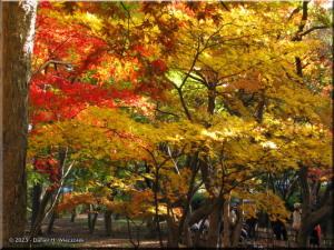 Nov30_JindaiBG_FallColor_115_BESTRC.jpg