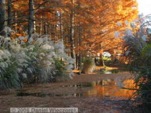 Nov30_JindaiBG_FallColor_146RC.jpg