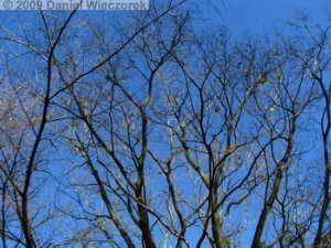 Dec12_NogawaPark_FallColor44_RC