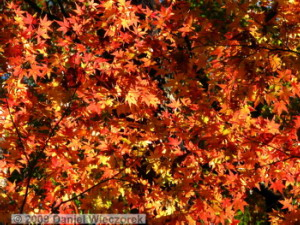 Dec6_Sorosenen_FallColors21RC
