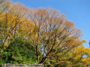 Dec4_131_KoishikawaGar_FallColorsRC