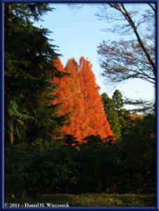 Dec10_99_JindaiBotGardenFallColorsRC