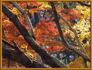 Dec08_08_JindaiBG_FallColorsRC