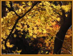 Dec08_09_JindaiBG_FallColorsRC