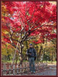 Dec08_19_JindaiBG_FallColorsRC