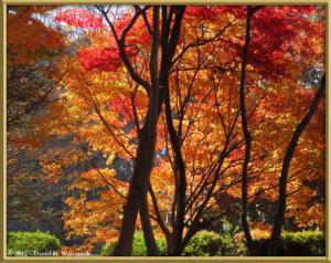 Dec08_42_43_Panorama_JindaiBG_FallColorsRC